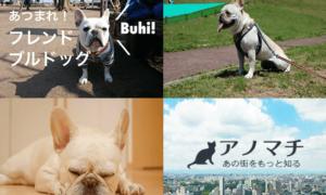 フレブルファンに聞いた。フレンチブルドッグ好きが住むべき街5選(東京と神奈川編)